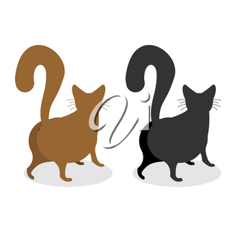 Cat Back. Pet escapes. Funny animal with bushy tail