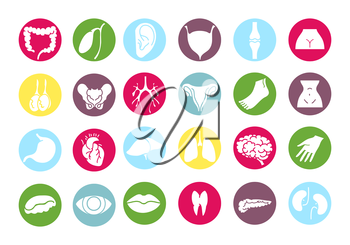 Human internal organs and parts of the body colorful set icons vector