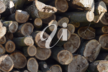 Logs are piled in a heap in front of the sawmill. Raw materials for the wood industry.