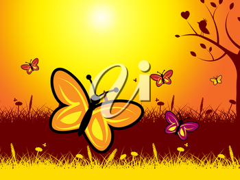 Butterflies And Flowers Showing Evening Nature And Summer