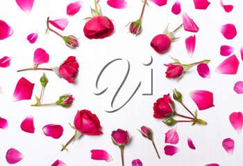 Frame from rose petals on white background.Pattern of red roses.Greeting card of flower.Flat lay, overhead view
