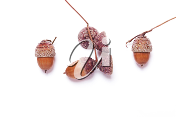 Acorns on a white background. Creative autumn concept. Pastel colors. Top view, flat