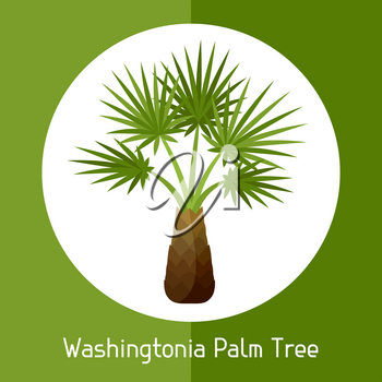 Washingtonia palm tree. Illustration of exotic tropical plant.