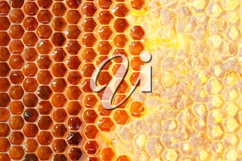 Honey in frame. Texture design.