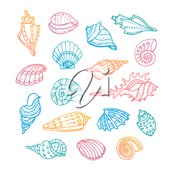 Doodle set of seashells. Isolated on white background. Hand drawn vector illustration.