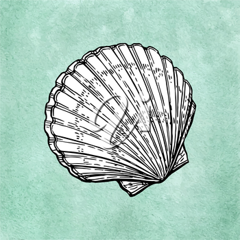 Scallop ink sketch on old paper background. Hand drawn vector illustration. Retro style.