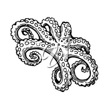 Seafood ink sketch. Octopus isolated on white background. Hand drawn vector illustration. Retro style.