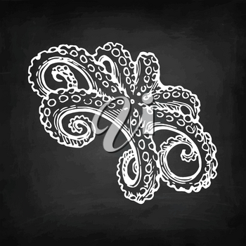 Octopus chalk sketch on blackboard background. Hand drawn vector illustration of seafood. Retro style.