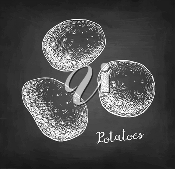 Chalk sketch of potatoes on blackboard background. Hand drawn vector illustration. Retro style.