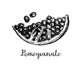 Pomegranate slice and seeds. Ink sketch isolated on white background. Hand drawn vector illustration. Retro style.