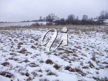 Winter landscape with a gray sky and grass on the snow-covered field.