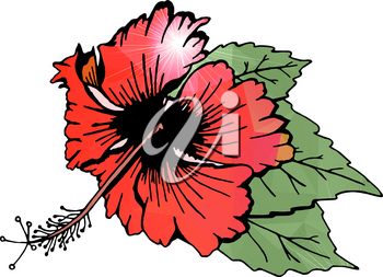 Hibiscus flower with leaves. Red flower, filled with polygons. Drawn by hand. Isolated on white. There is an option in the vector.