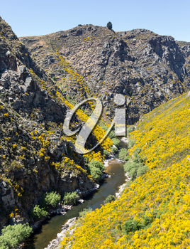 Railway track of Taieri Gorge tourist railway runs alongside river in a ravine on its journey up the valley