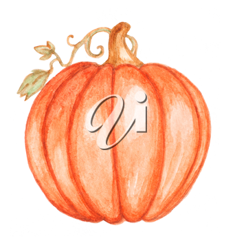 Watercolor orange pumpkin on a white background