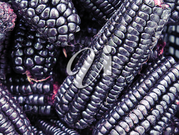 pile of Peruvian purple corn background