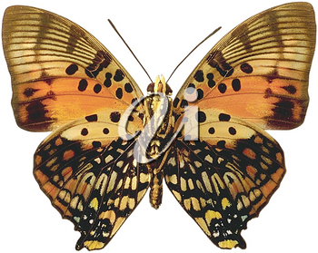 Royalty Free Photo of a Butterfly or Moth