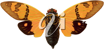 Royalty Free Photo of a Cicada