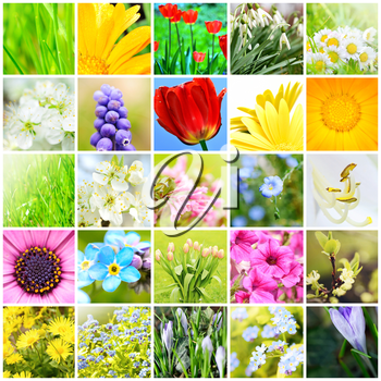 Spring natural abstract collage with plants and flowers in garden. A spring collection. Background collage. Spring theme collage.