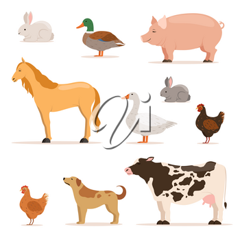 Different domestic animals on farm. Geese, ducks, hens chickens and cattle. Vector illustrations set. Duck and cow, collection of domestic farm animals