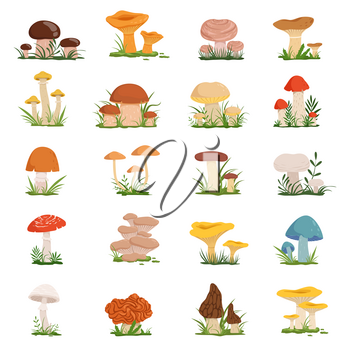 Different mushrooms on green grass. Vector set of mushroom in cartoon style illustration