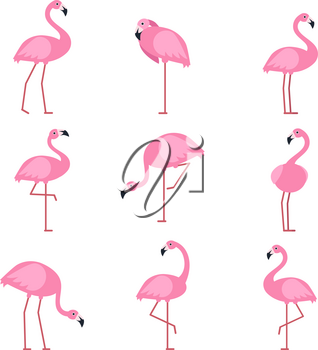 Cartoon pictures of exotic pink bird flamingo. Vector illustrations isolate. Animal nature cartoon, wildlife drawing collection