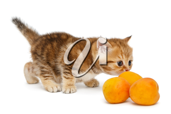 Small, funny British marble kitten and apricots on a white background