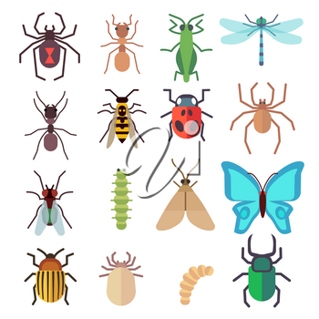 Insect vector flat icons set. Butterfly and bug, fly and ant illustration