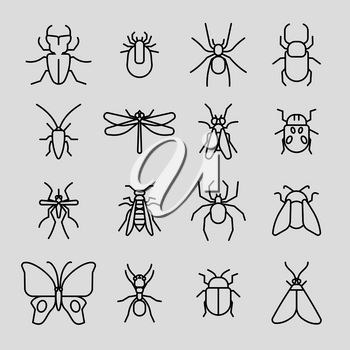 Insect vector thin line icons set. Cockroach and mosquito, spider and butterfly illustration
