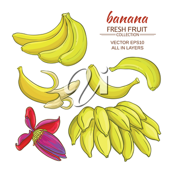banana fruits vector set on white background