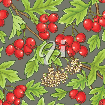 hawthorn branches vector pattern on color background