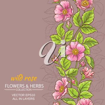 wild rose flowers pattern on color background