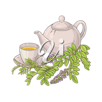 licorice herbal tea illustration on white background