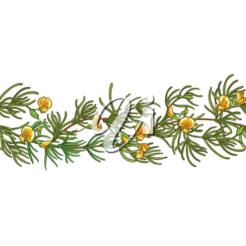 rooibos branch vector pattern on white background