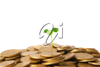 Green plant growing from the coins. Money financial concept.