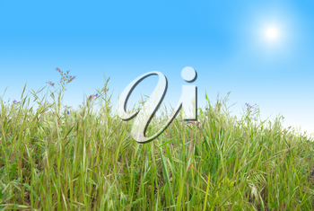 Green grass with blue sunny sky for background