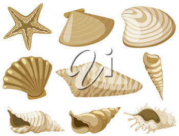 Different types of seashells in brown color illustration