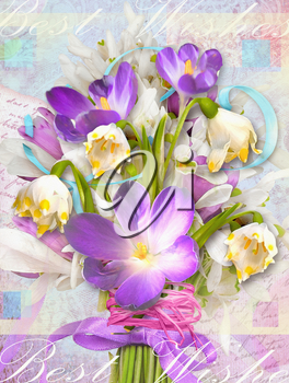 Spring festive card with flowers primroses and crocuses. Can be used as greeting card for the International Women's Day, Mother's Day, birthdays, weddings and other celebrations.