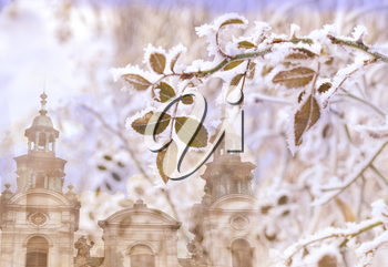 Leaves of roses in the frost on the background of the medieval city of Lviv. Double exposition using the archetype and plants.