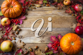 Frame of pumpkins, apples, acorns, berries and fall leaves on wooden background. Thanksgiving background with seasonal vegetables and fruits.