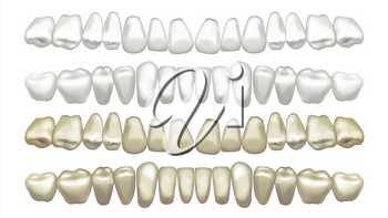 Teeth Whitening Vector. Teeth And Tooth Dental Concept. Healthcare. Realistic Isolated Illustration