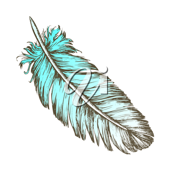 Color Lost Bird Outer Element Feather Sketch Vector. Fluffy Feather Bird Detail Covering Varmint Body Arise From Certain Well-defined Tracts On Skin. Designed In Retro Style Illustration