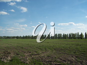 Field outside the city, agriculture plants