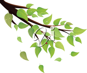 Tree branch with fresh green leaves on white background.