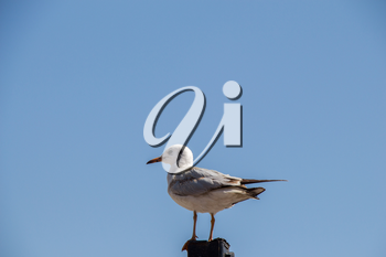 Single seagull is sitting on the roof