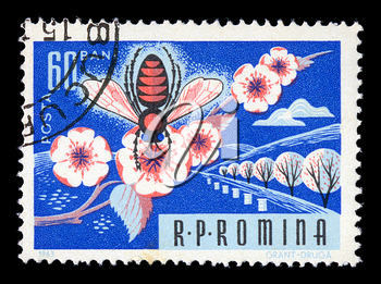 ROMANIA - CIRCA 1963. Vintage postage stamp printed by the Romanian Post shows honey bee on almond tree blossom illustration, circa 1963.