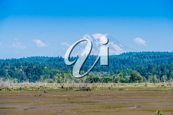 A view of the Nisqually Wetlands and Mount Rainier.