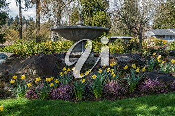 A view of a garden of Daffodils and a fountain.