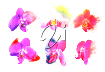 Set orchid flowers. Watercolor buds with blots of paint. Expressive style. For spa salon, wedding cards, decorating holidays, anniversaries