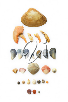 Collection of seashells, seastar, seaglass and mussels all on white background