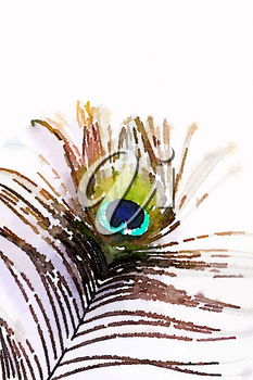 Digital watercolour of a peacock feather on white background